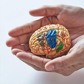 Two hands holding brain model